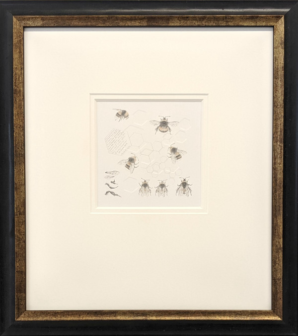 Study of a  BumbleBee 027 by Louisa Crispin