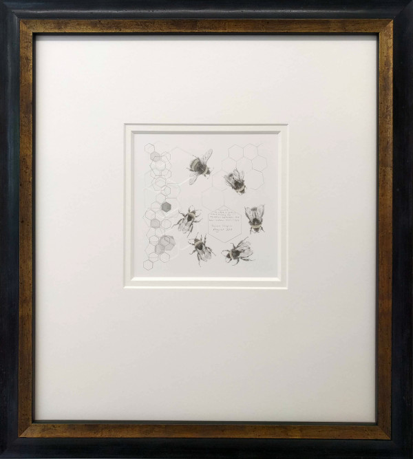 Study of a  BumbleBee 007 by Louisa Crispin
