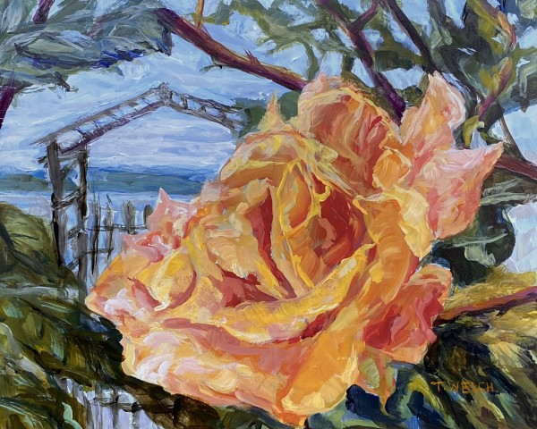 Debra's Rose by Terrill Welch