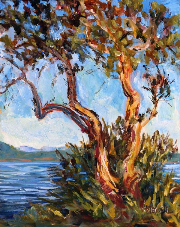 Arbutus Over Sansum Narrows Salt Spring Island by Terrill Welch