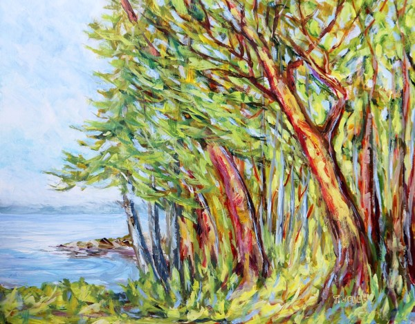 Arbutus Trees near Entrance to Active Pass by Terrill Welch