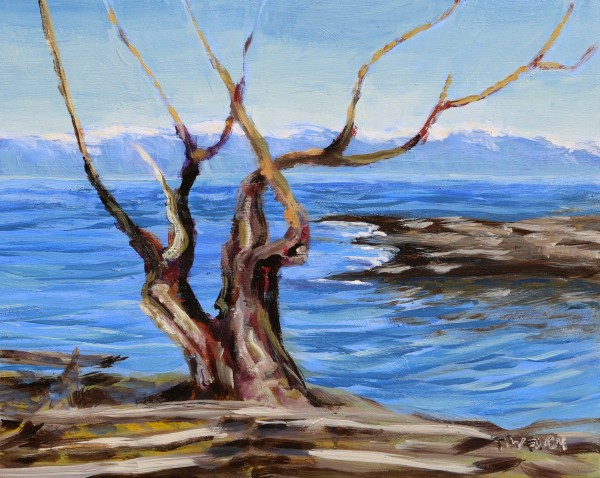 Arbutus Trunks Against the Salish Sea by Terrill Welch