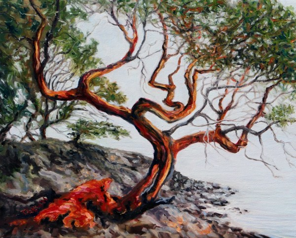 Arbutus Tree in the fog St. John Point by Terrill Welch