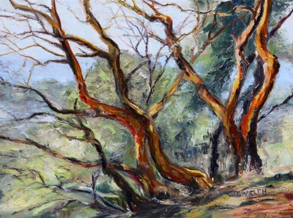 Arbutus on Mt. Parke by Terrill Welch