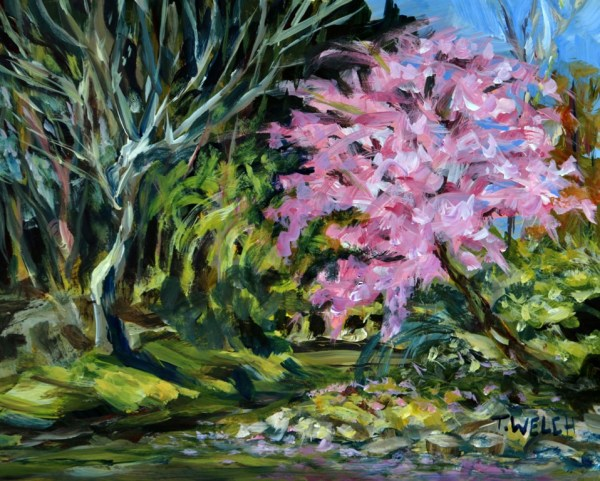 Cherry Tree in Bloom by Terrill Welch