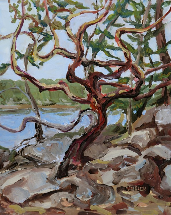 Shapely Arbutus Tree by Terrill Welch