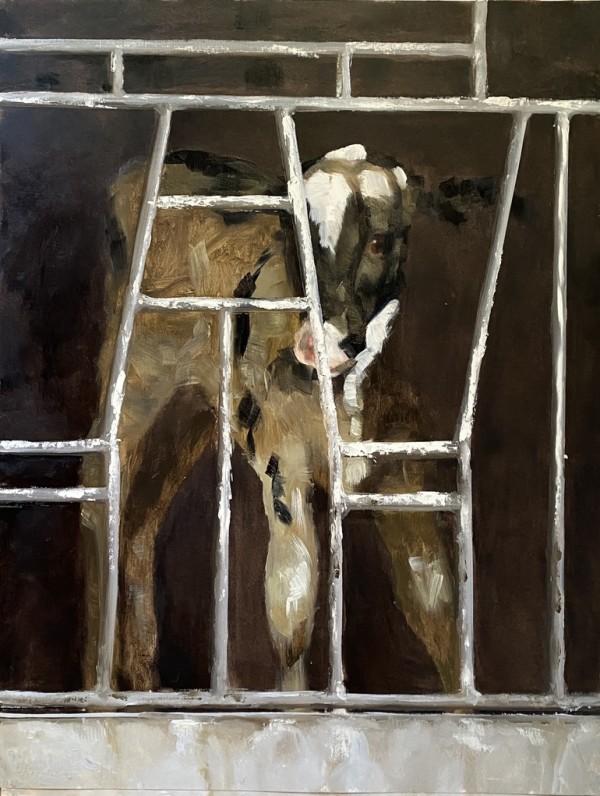 Calf study VI by Philine van der Vegte