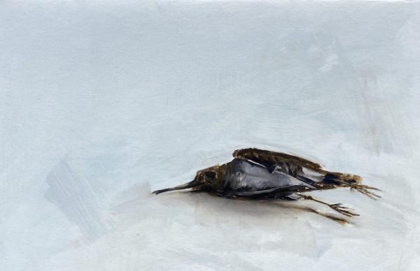 Common snipe by Philine van der Vegte