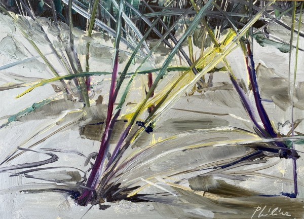 Helmgrass (beach grass) by Philine van der Vegte