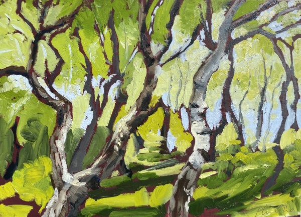 Silver poplars