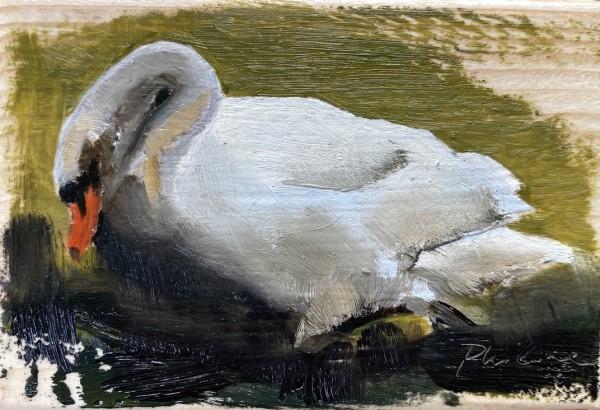 Swan III by Philine van der Vegte