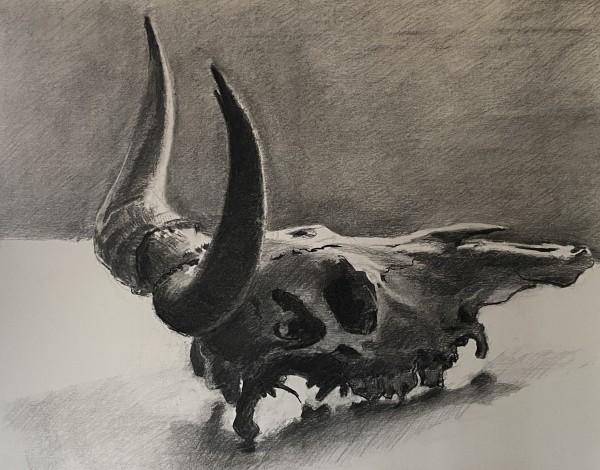 cattle skull by Philine van der Vegte