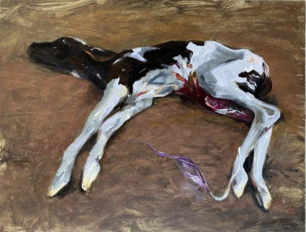 Newborn calf by Philine van der Vegte