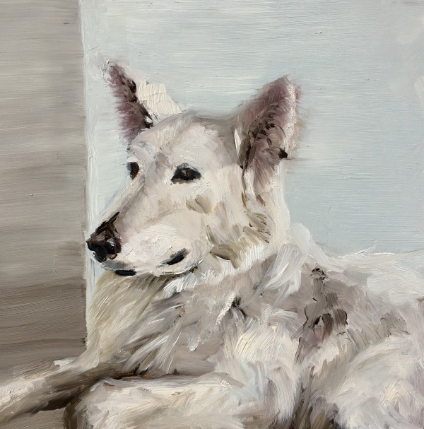 White shepherd by Philine van der Vegte