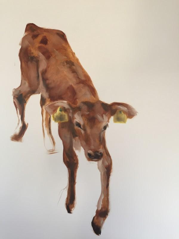 Portrait of calf #0212