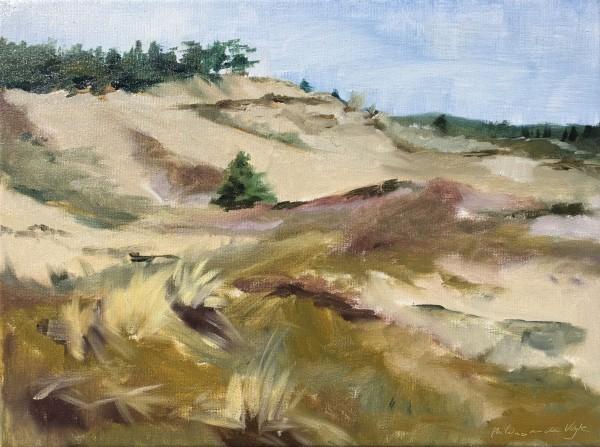 Schoorlse duinen (Dunes in Schoorl)
