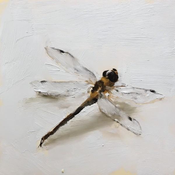 Dragonfly by Philine van der Vegte