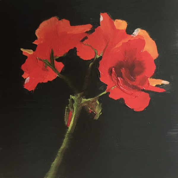 Geraniums by Philine van der Vegte