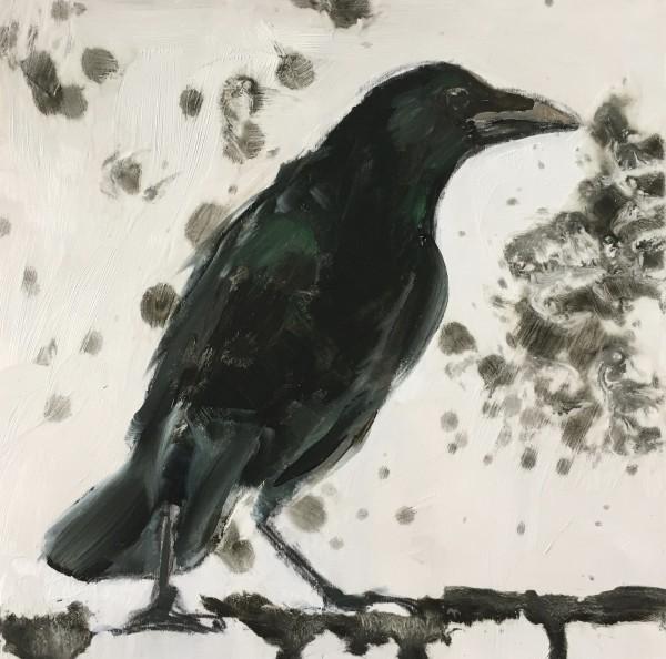 Crow on a branch by Philine van der Vegte
