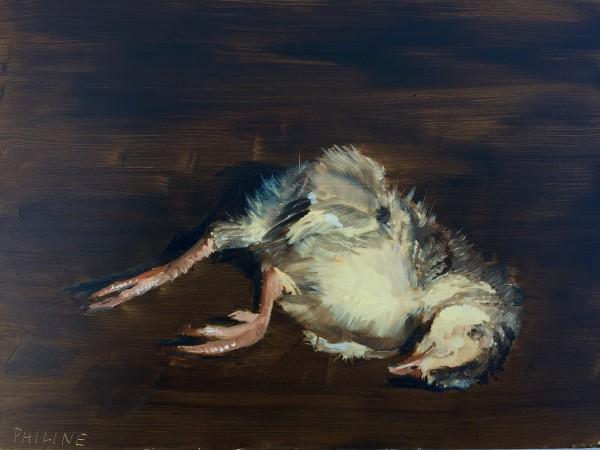 Turkey chick still life
