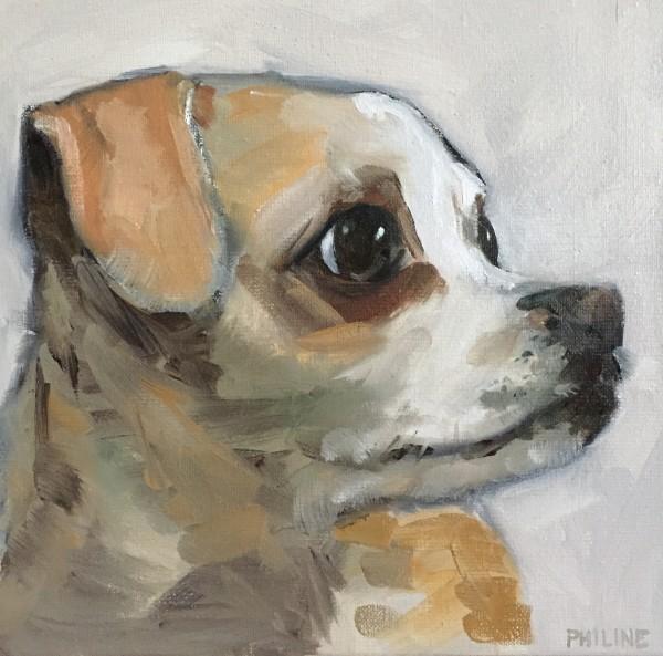 Daisy by Philine van der Vegte