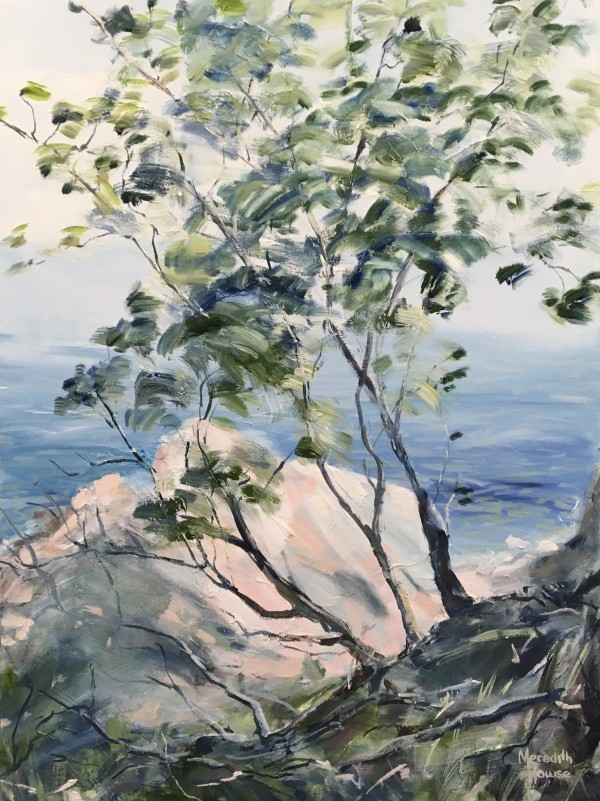 Noosa National Park by Meredith Howse