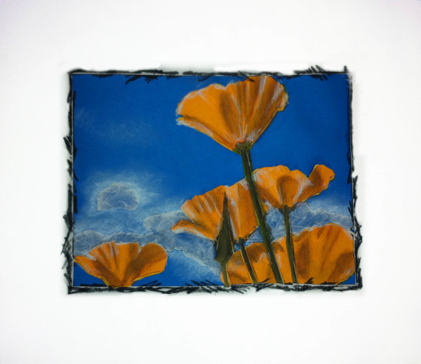 California Poppies by Kathy Ferguson