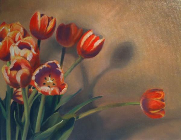 Tulip Shadows by Kathy Ferguson