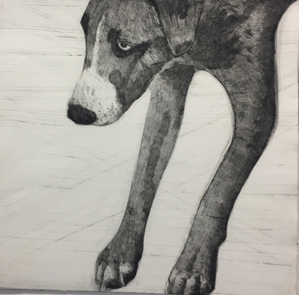 Grey Dog by Dawn  Endean