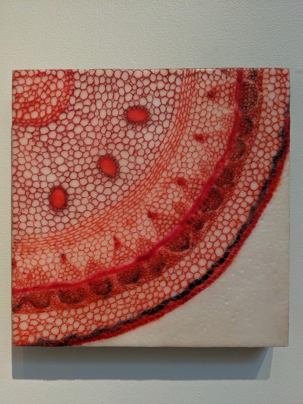 Hidden Beauty by Joyce Watts Coolidge