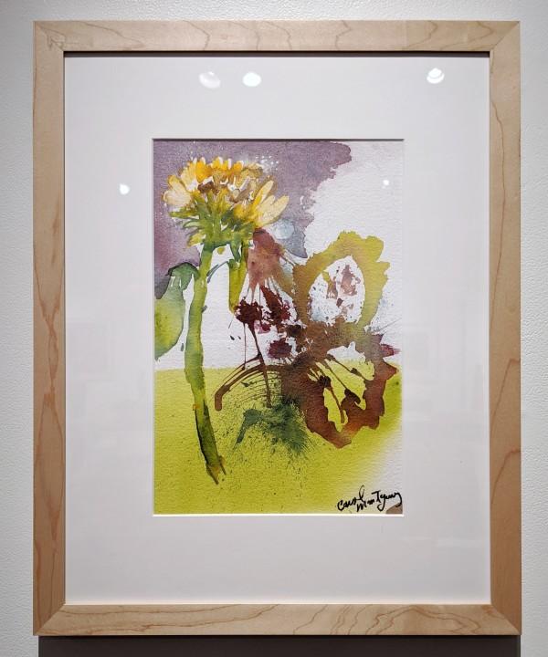 Flowers by Carol Montgomery