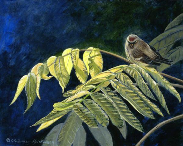 Redpoll & Butternut by Cindy Sorley-Keichinger