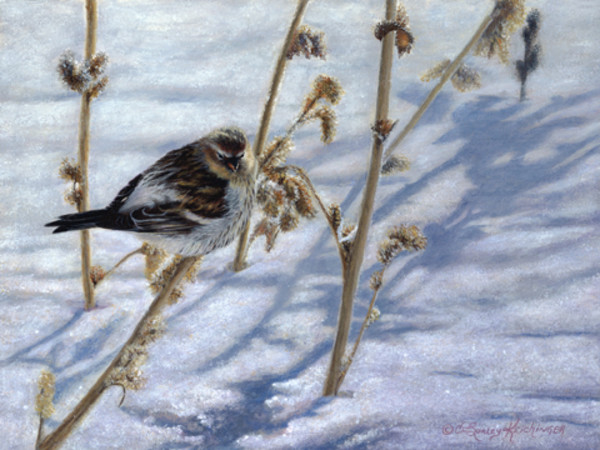 A Touch of Frost by Cindy Sorley-Keichinger