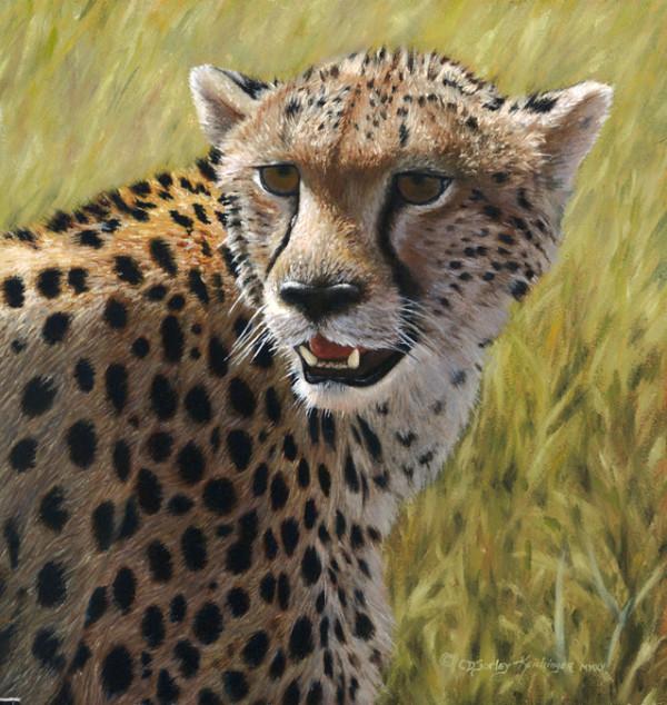Cheetah Portrait by Cindy Sorley-Keichinger