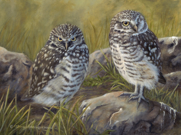 Dusk look outs by Cindy Sorley-Keichinger