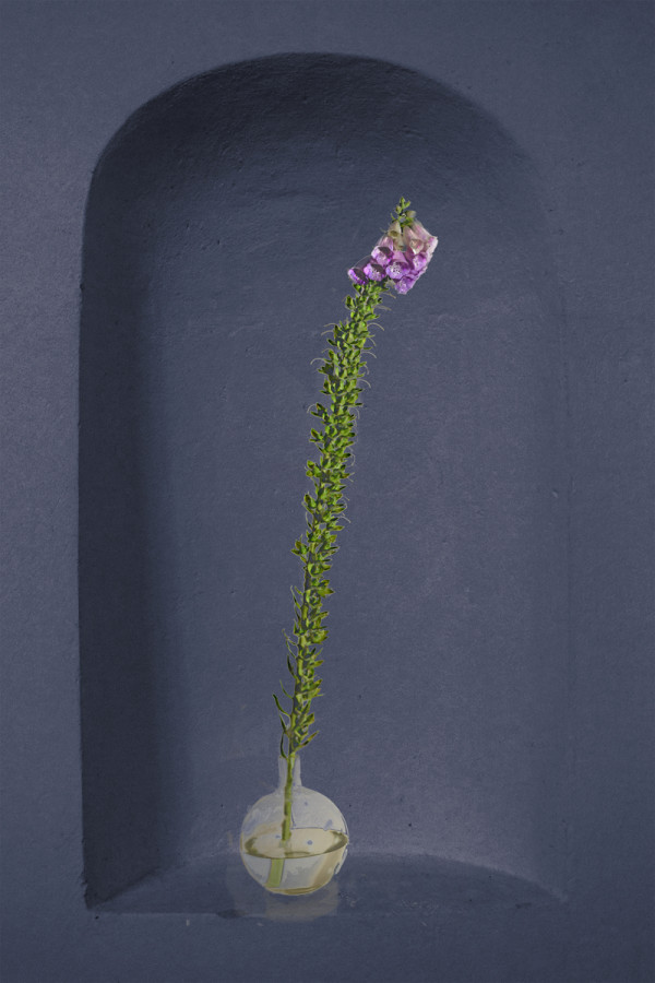 Beauty in Isolation 6_Foxglove