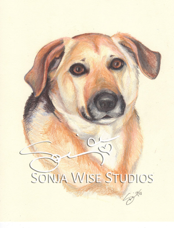 Bailey Pet Portrait by Sonja Petersen