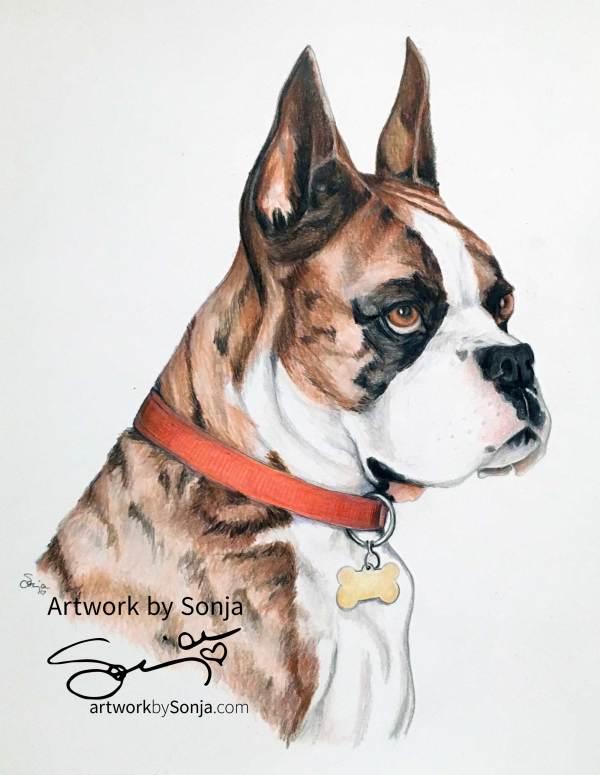 Boxer Pet Portrait by Sonja Petersen