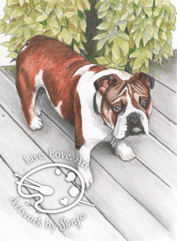 Bulldog Pet Portrait by Sonja Petersen