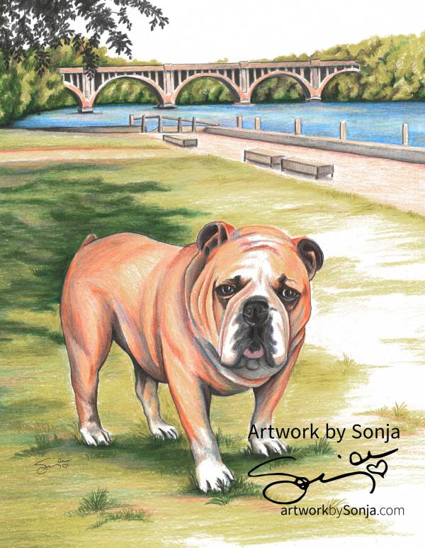 Bulldog at City Dock by Sonja Petersen
