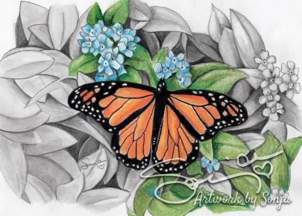 Butterfly No. 3 by Sonja Petersen