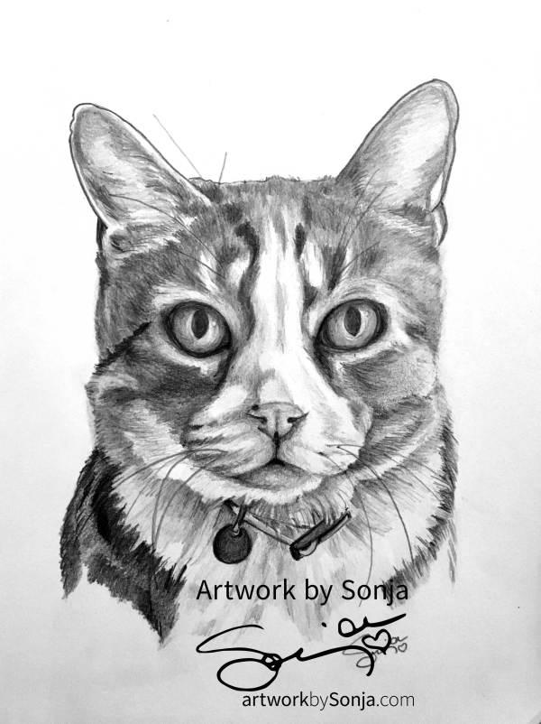 Tabby Cat Pet Portrait by Sonja Petersen