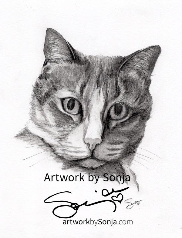 Cat Memorial Pet Portrait by Sonja Petersen
