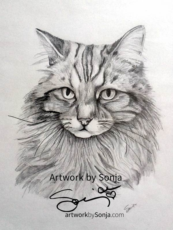 Cat Pet Portrait by Sonja Petersen