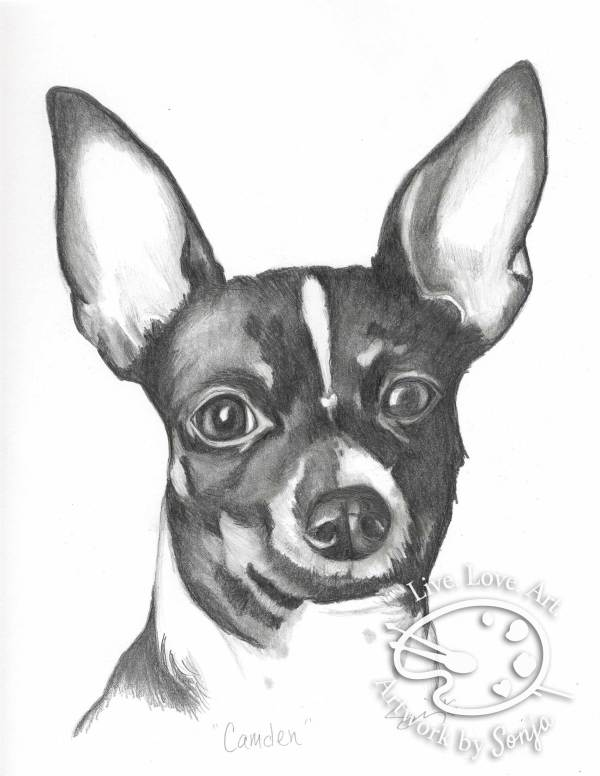 Chihuahua Pet Portrait by Sonja Petersen