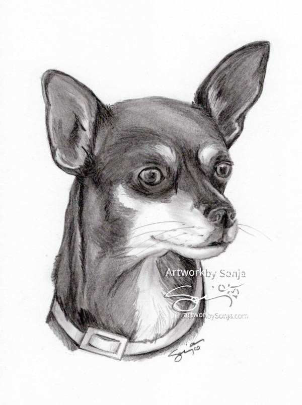 Chihuahua Dog Portrait by Sonja Petersen