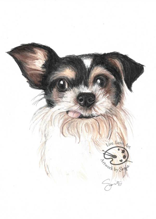 Dog Memorial Portrait by Sonja Petersen