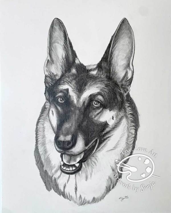 German Shepherd Pet Portrait  in pencil by Sonja Petersen