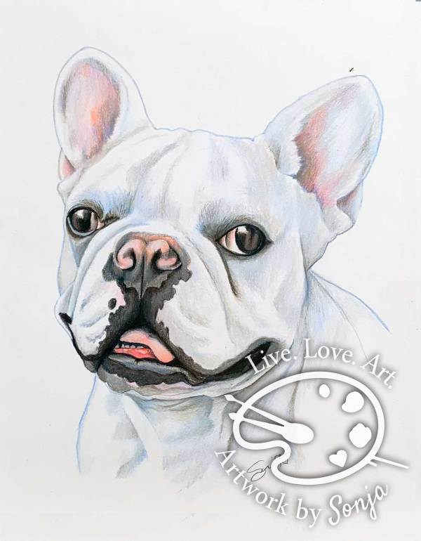 Frenchie Drawing by Sonja Petersen