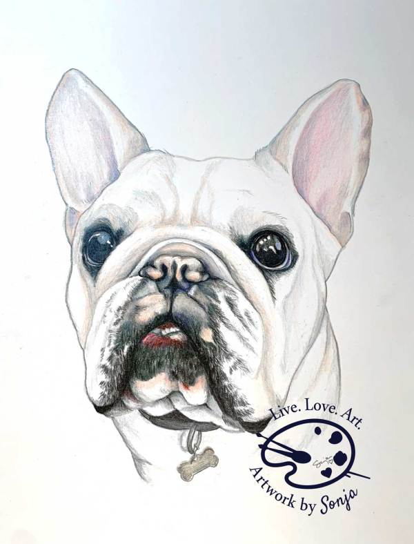Henry the French Bulldog Portrait by Sonja Petersen